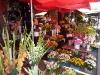 Blumen auf dem Zentralmarkt