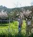 """Am Garten von \""""C´an Tomas\"""""""
