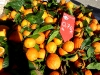 ... und jede Menge Apfelsinen