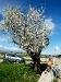... nicht ohne Mandelbaum!