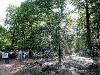 Wasserbaum im Park
