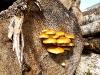 Eine hübsche Pilzkultur