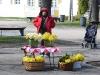 Osterglockern - Verkauf