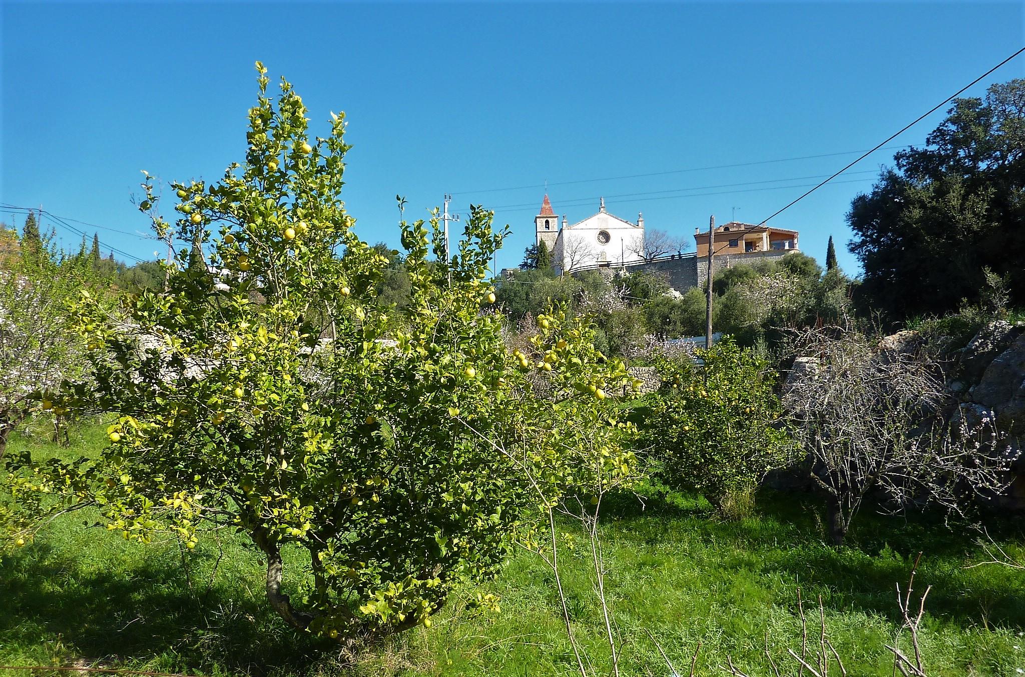 Kirche in Galilea