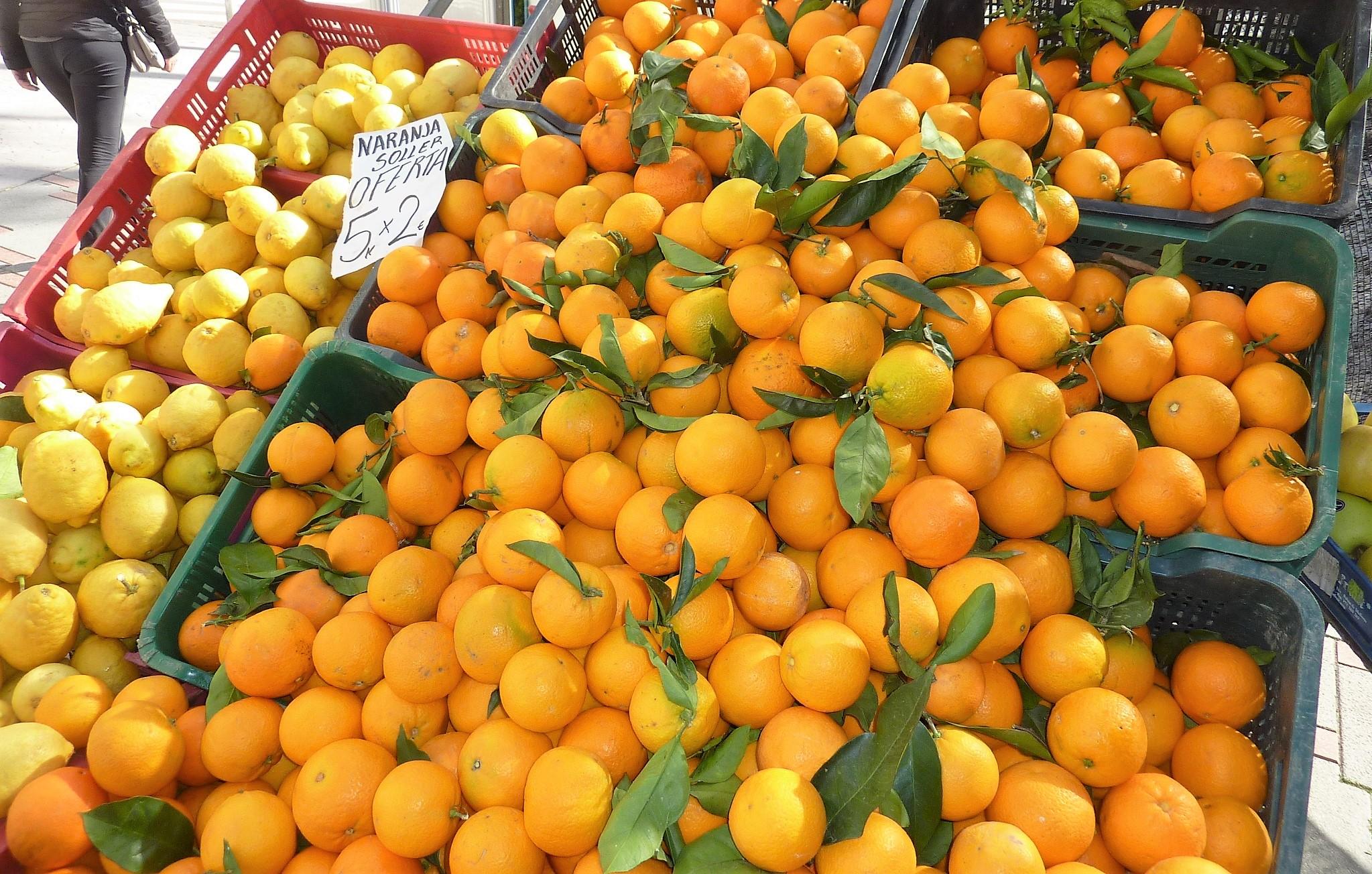 Apfelsinen frisch geerntet