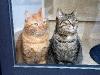 Zwei aufmerksame Beobachter