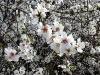 Einzelner Blütenzweig