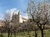 Kirche mit Mandelbäumen
