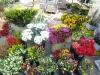 Blumen in reicher Auswahl