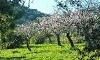 Garten mit Mandelbäumen
