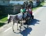 Pferdegespann unterwegs