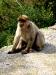 Da gibt´s tatsächlich Affen...