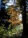 Herbstliche Stimmung im Wald...