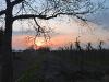 Abend über der Plantage