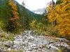 Herbst am Gemstelbach