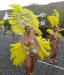 Karneval in Los Cancajos