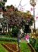 Kortallenbaum im Stadtgarten