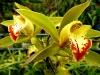 Im Orchideengarten