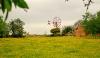 Windmühle im Margeritenfeld