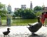 Entenfamilie im Park vor dem KLoster