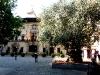 Rathaus mit dem 1000-jährigen Olivenbaum