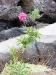 Blume zwischen der Lava