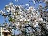 Blütenpracht Ende Februar