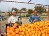 ... mit frisch gepressten Orangen
