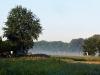 Morgennebel auf den Wiesen